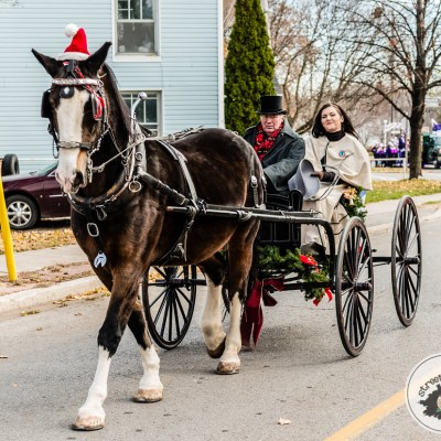 horse and buggy_15804553065_l