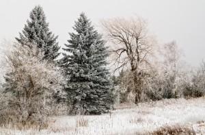 winter wonderland2 cfx